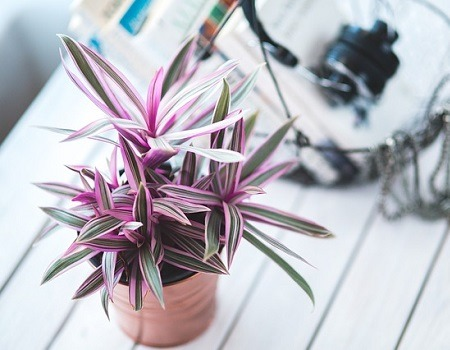 Sell Plants on Etsy